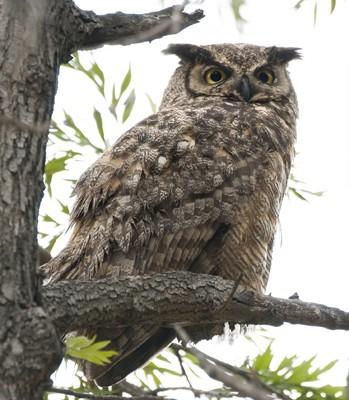 San Fernando Valley Audubon Society