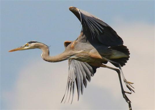 CANCELLED Young Birders' Walk — Sepulveda Basin Wildlife Reserve