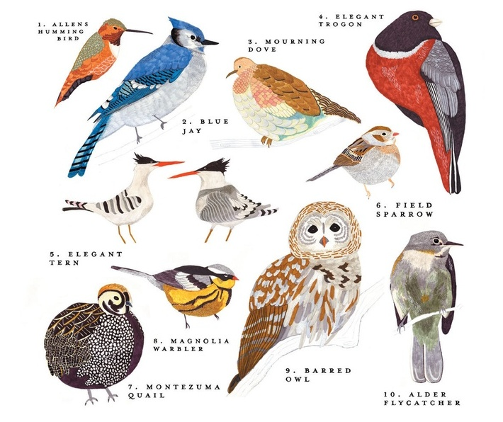 General Meeting — Tom Hinnebusch on Birds and Their Names – San ...