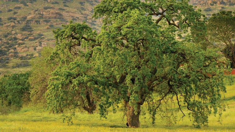 Chatsworth Nature Preserve