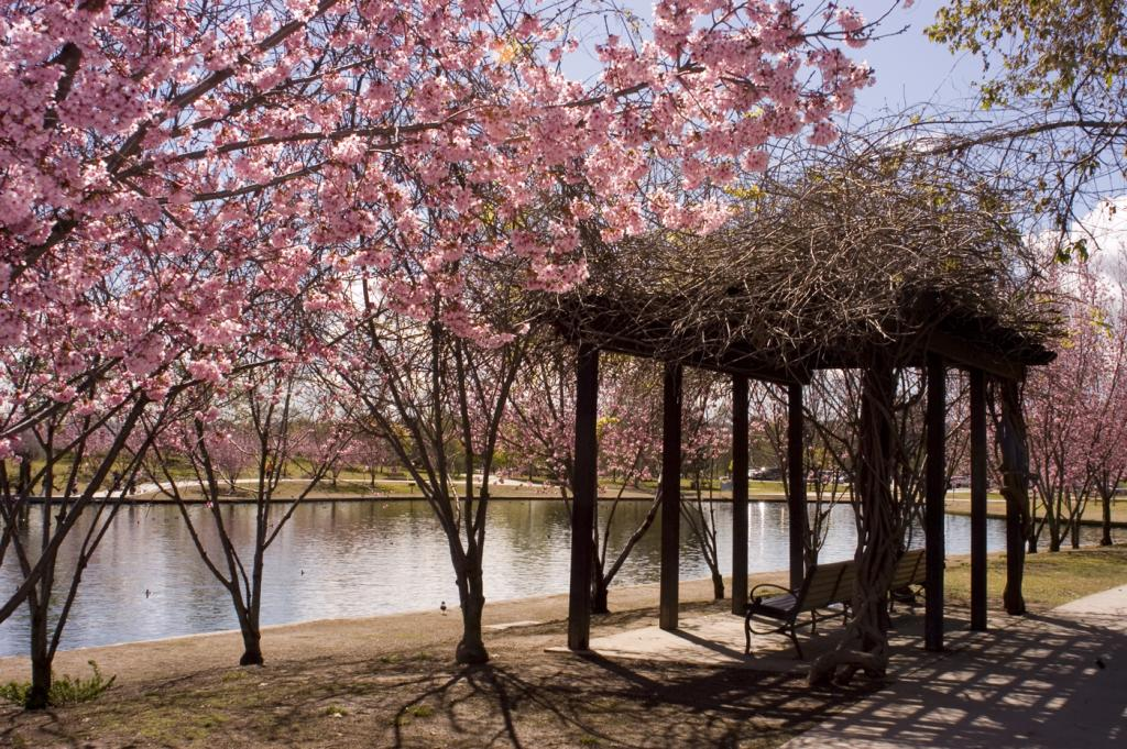 Lake Balboa/Beilenson Park
