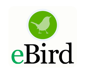 Sfv Christmas 2020 2020 Christmas Bird Count   San Fernando Valley Audubon Society